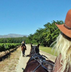 Carriage ride through the vineyards of Boschendal in South Africa