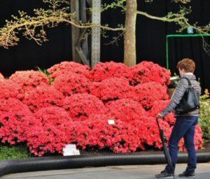 Ghent florals