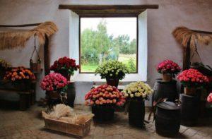 Museum of roses at Hacienda la Compañía near Quito