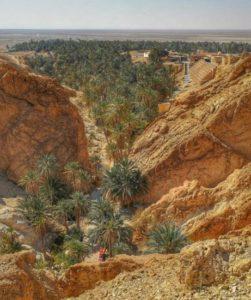 Oasis of Chebika near Tozeur in Tunisia