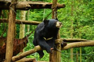 Refuge Bears Laos
