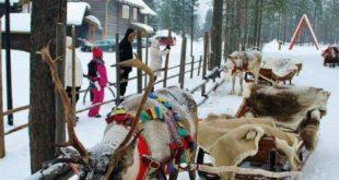 Reindeer sleigh in Santa Claus Village in Rovaniemi