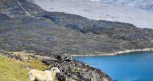 The most interesting historical curiosities of Greenland