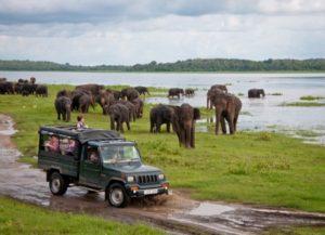 Trips to Sri Lanka with Panipuri Trips