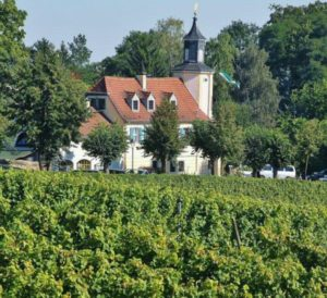 Winery and vineyards in Radebeul near Dresden